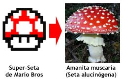 Super Mario Bros - Seta