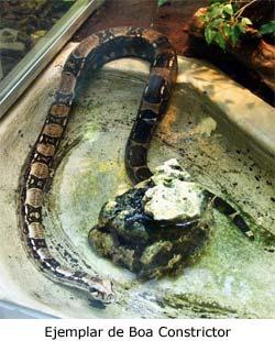 Cría de serpiente