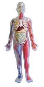 Colección - El cuerpo humano